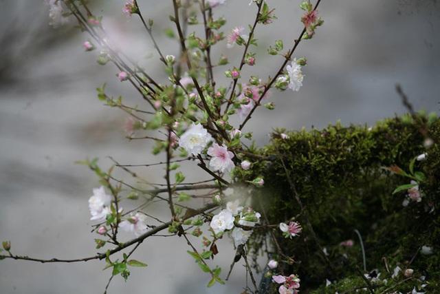 Mặc thời tiết mưa rét, người dân chen chân mua hoa Tết tại chợ hoa lâu đời nhất Hà Nội - Ảnh 7.