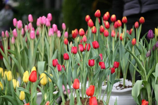 Mặc thời tiết mưa rét, người dân chen chân mua hoa Tết tại chợ hoa lâu đời nhất Hà Nội - Ảnh 8.