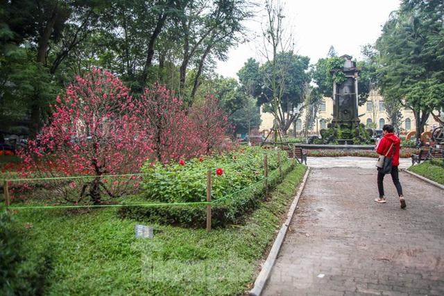 Đường phố Hà Nội trang hoàng đón Tết Canh Tý 2020 - Ảnh 10.