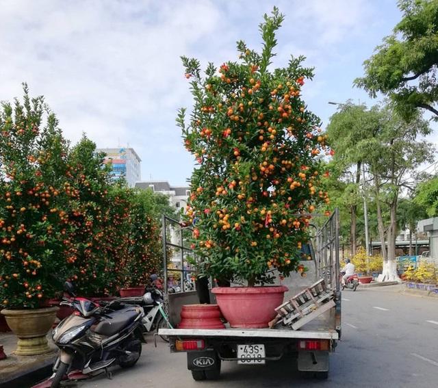 Cận Tết, dịch vụ shipper chuyển cây cảnh Tết kiếm tiền triệu mỗi ngày - Ảnh 1.