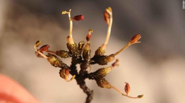 Số phận bi thảm của 10 loài thực vật mới phát hiện năm 2019  - Ảnh 4.