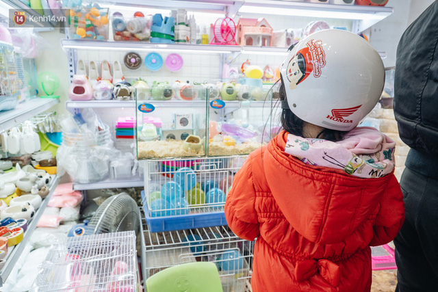 Năm Canh Tý, người trẻ tìm mua chuột hamster để giảm stress và cầu chúc may mắn  - Ảnh 15.