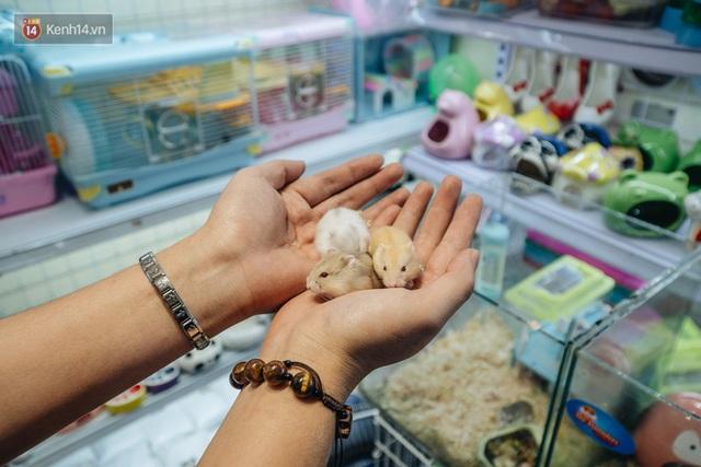 Năm Canh Tý, người trẻ tìm mua chuột hamster để giảm stress và cầu chúc may mắn  - Ảnh 17.