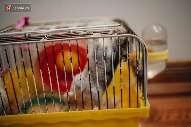 Năm Canh Tý, người trẻ tìm mua chuột hamster để giảm stress và cầu chúc may mắn  - Ảnh 18.