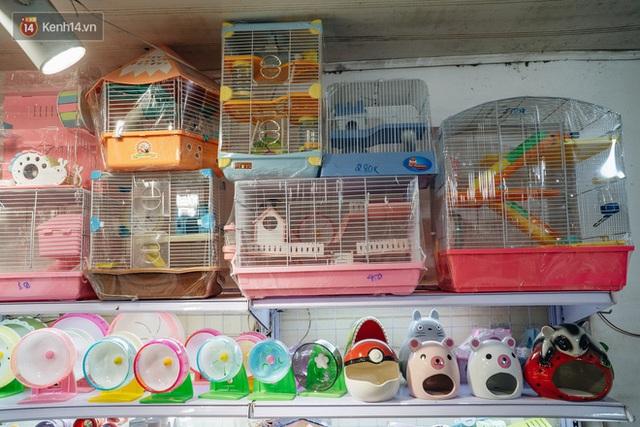 Năm Canh Tý, người trẻ tìm mua chuột hamster để giảm stress và cầu chúc may mắn  - Ảnh 4.