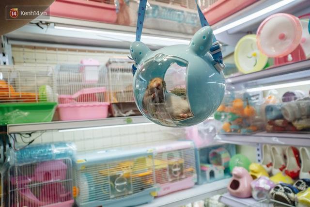 Năm Canh Tý, người trẻ tìm mua chuột hamster để giảm stress và cầu chúc may mắn  - Ảnh 5.