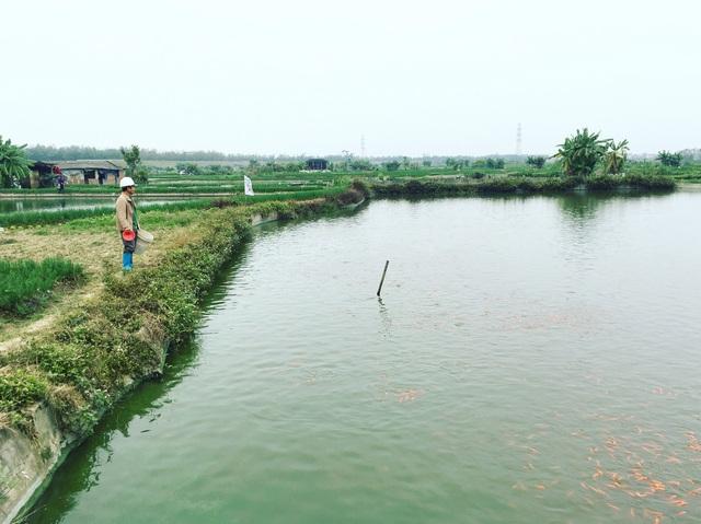 Đỏ rực cả làng, hàng tấn cá chép chuẩn bị Tết ông Táo - Ảnh 1.