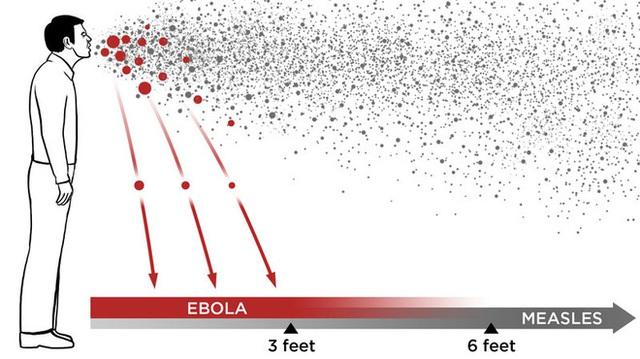 Những sự thật ít người biết về virus: Chúng đến từ đâu, lây lan và gây bệnh như thế nào? - Ảnh 4.