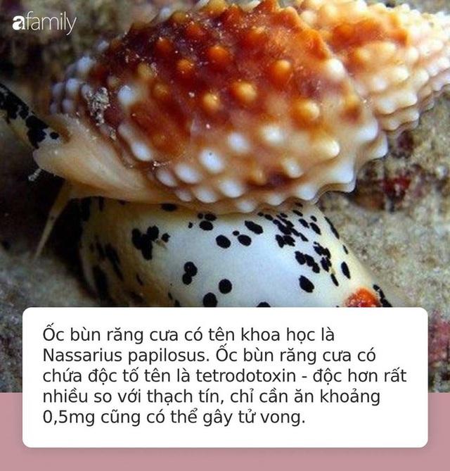 Cảnh báo tuyệt đối đừng ăn nhầm loại ốc này vì độc gấp nhiều lần thạch tín, chỉ ăn 0,5mg cũng đủ khiến bạn tử vong hoặc sống thực vật suốt đời - Ảnh 3.