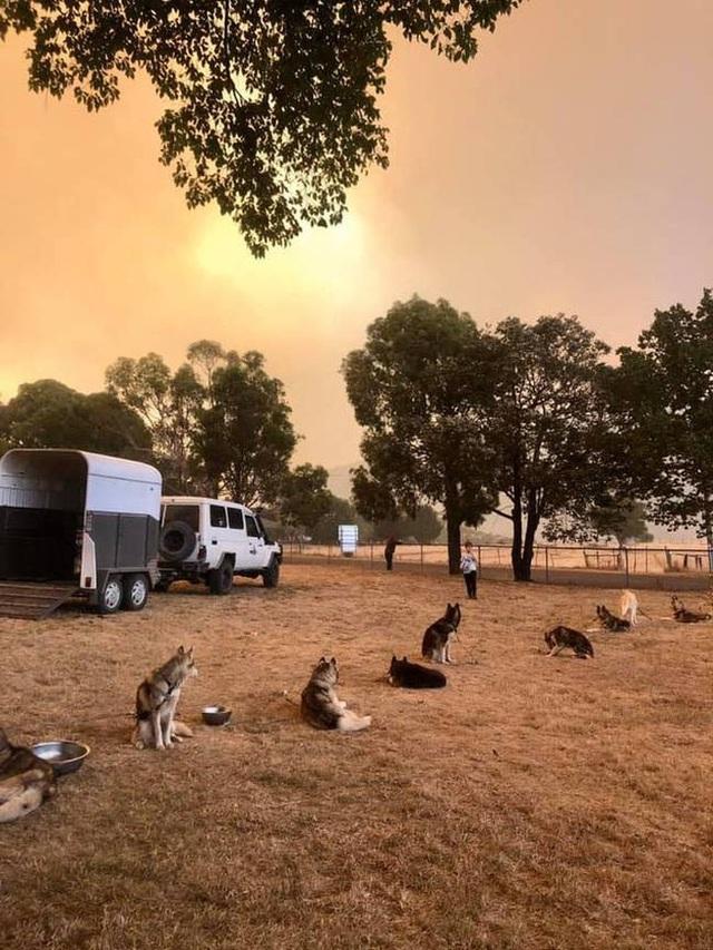 Những tin tức mát lòng giữa bão lửa kinh hoàng, thắp sáng thêm niềm tin và sự lạc quan cho người dân Úc - Ảnh 12.