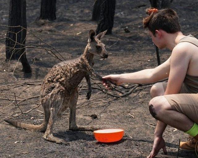 Thương quá tự nhiên ơi: Hình ảnh xót xa cho thấy đại thảm họa cháy rừng tại Úc đang khiến các loài vật bị giày vò kinh khủng đến mức nào - Ảnh 11.