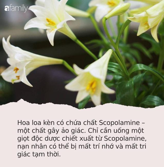 Cận Tết, điểm danh lại những loại hoa đẹp rực rỡ nhưng phải hết sức thận trọng vì có thể khiến mất trí nhớ thậm chí gây chết người rất nhanh  - Ảnh 1.