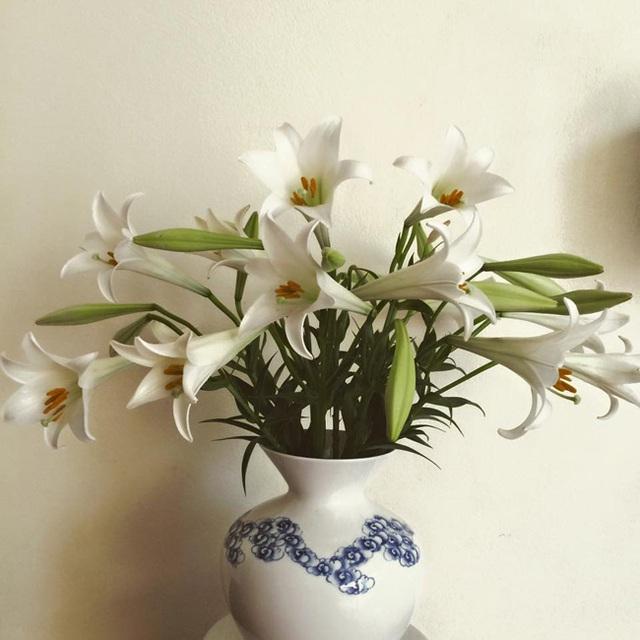 Cận Tết, điểm danh lại những loại hoa đẹp rực rỡ nhưng phải hết sức thận trọng vì có thể khiến mất trí nhớ thậm chí gây chết người rất nhanh  - Ảnh 2.