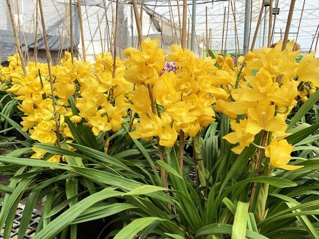 Nắng đẹp, hoa cười, người trồng địa lan Đà Lạt khóc - Ảnh 1.
