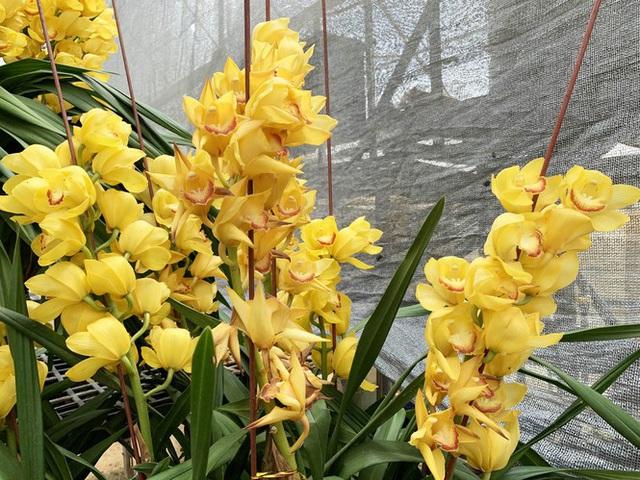 Nắng đẹp, hoa cười, người trồng địa lan Đà Lạt khóc - Ảnh 2.