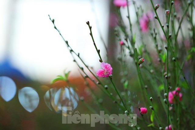 Đào, quất, hoa ngập tràn phố trước rằm tháng Chạp - Ảnh 11.