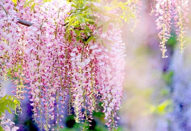 Cận Tết, điểm danh lại những loại hoa đẹp rực rỡ nhưng phải hết sức thận trọng vì có thể khiến mất trí nhớ thậm chí gây chết người rất nhanh  - Ảnh 3.