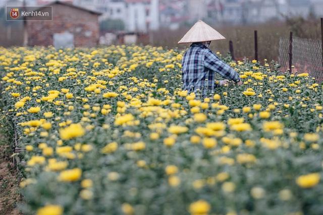 Đào Nhật Tân tấp nập xuống phố, người dân thích thú mua thưởng thức không khí Tết sớm - Ảnh 7.