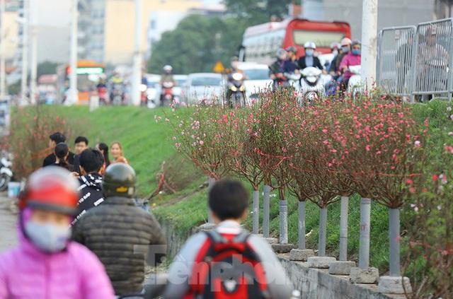 Đào, quất, hoa ngập tràn phố trước rằm tháng Chạp - Ảnh 10.