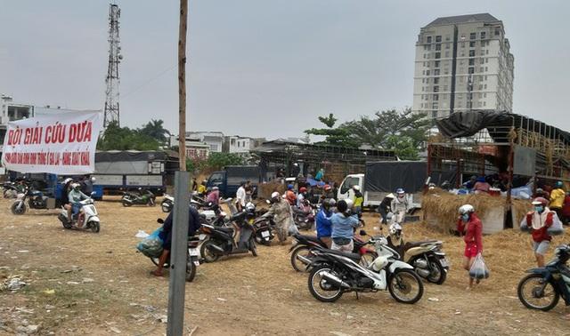 Người Sài Gòn giải cứu dưa giúp nông dân Bình Định - Ảnh 1.