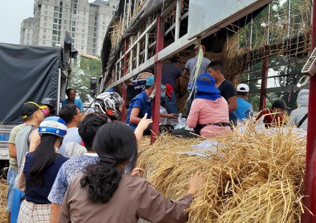 Người Sài Gòn giải cứu dưa giúp nông dân Bình Định - Ảnh 2.