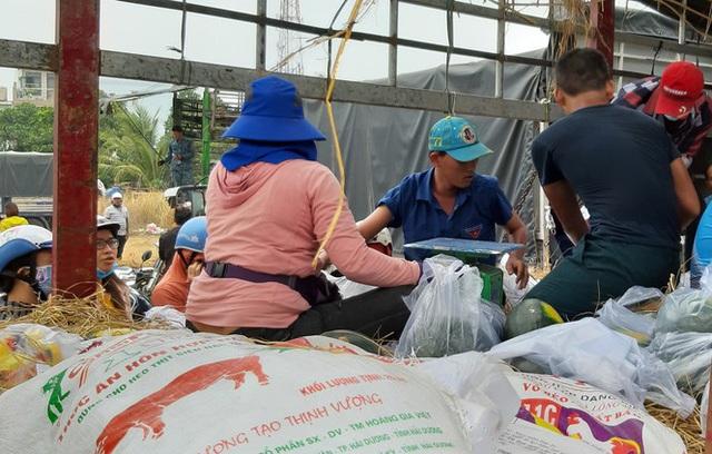 Người Sài Gòn giải cứu dưa giúp nông dân Bình Định - Ảnh 3.