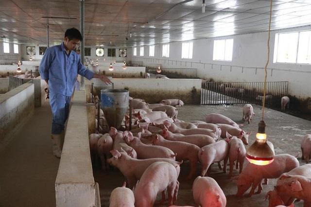 Kịch bản nhập khẩu 100 nghìn tấn thịt lợn bị ảnh hưởng - Ảnh 1.