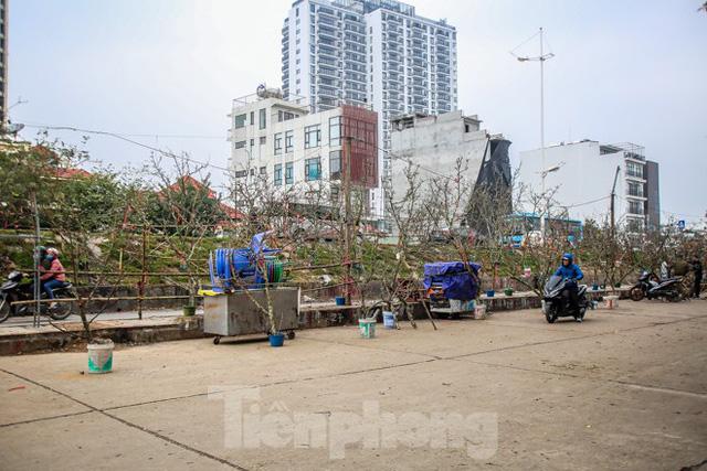 Hoa lê rừng tiền triệu hút khách Thủ đô sau Tết - Ảnh 1.