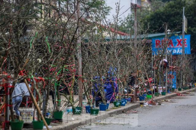 Hoa lê rừng tiền triệu hút khách Thủ đô sau Tết - Ảnh 2.