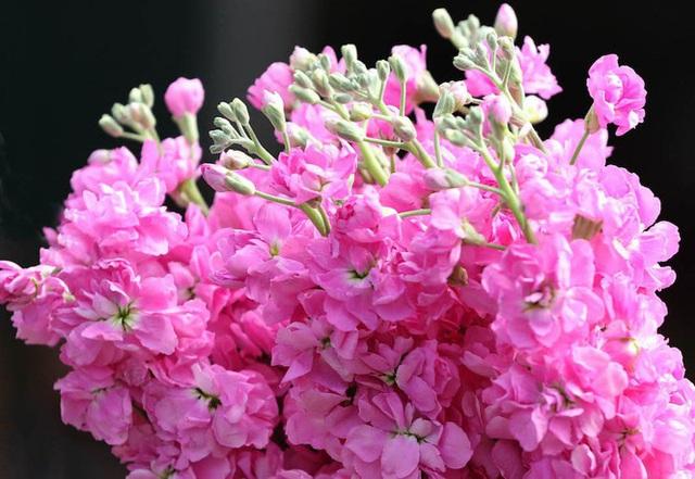 Giá hoa hồng Đà Lạt giảm sốc mùa Valentine - Ảnh 4.