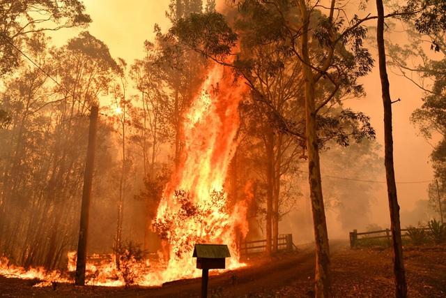 Từ cháy rừng nước Úc đến dịch virus corona ở Vũ Hán: Không phải thảm họa hay dịch bệnh, điều đáng sợ nhất là đánh mất sự lạc quan và tình người trong thời khắc đen tối nhất cuộc đời - Ảnh 1.