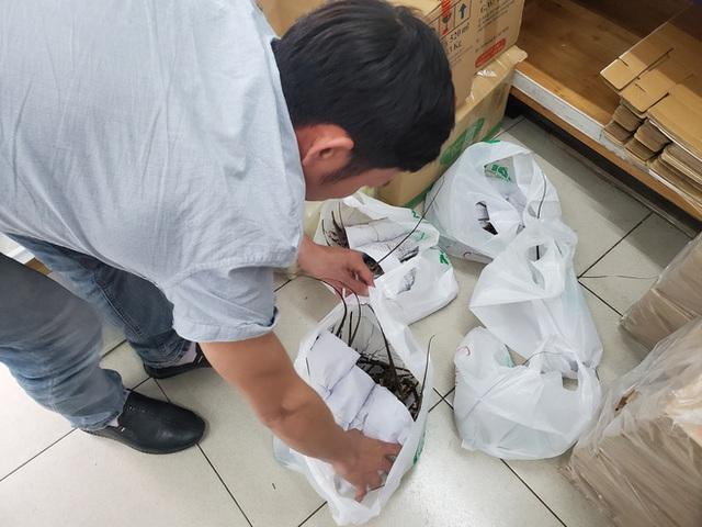 """Giải cứu tôm hùm ở Hà Nội: Hàng đồng giá 299.000 đồng/con """"cháy"""" hàng - Ảnh 4."""