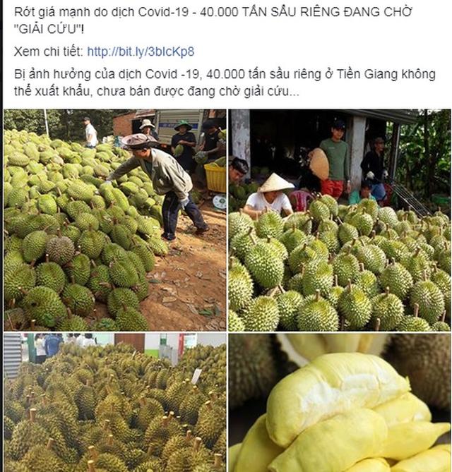 Thực hư thông tin 40.000 tấn sầu riêng ở Tiền Giang cần giải cứu - Ảnh 1.