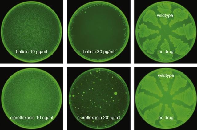 Trí tuệ nhân tạo vừa giúp các nhà khoa học tìm ra một loại kháng sinh mạnh nhất từ trước đến nay - Ảnh 3.