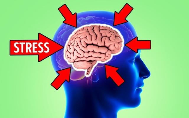 Não bộ sẽ co lại nếu tình trạng căng thẳng xảy ra thường xuyên, may mắn thay, đây là chìa khóa dành cho bạn! - Ảnh 2.