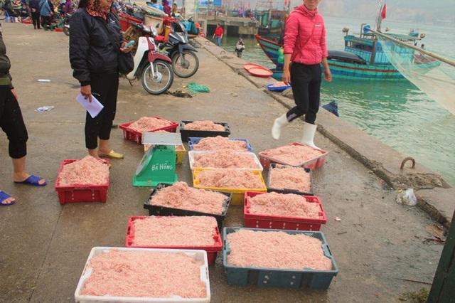 Ngư dân Hà Tĩnh hốt lộc trời đầu năm, kiếm tiền triệu sau vài giờ ra khơi - Ảnh 6.