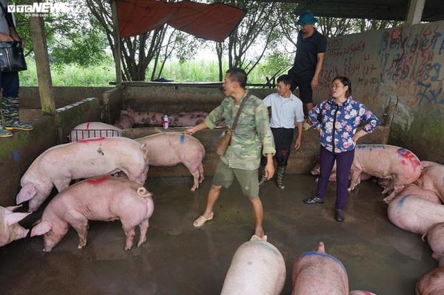 Giá thịt lợn bắt đầu giảm nhiệt - Ảnh 2.