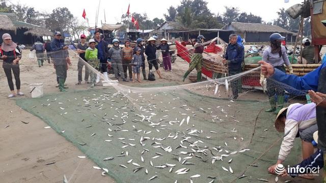 Được mùa cá trích, ngư dân xứ Thanh thu chục triệu mỗi ngày - Ảnh 1.
