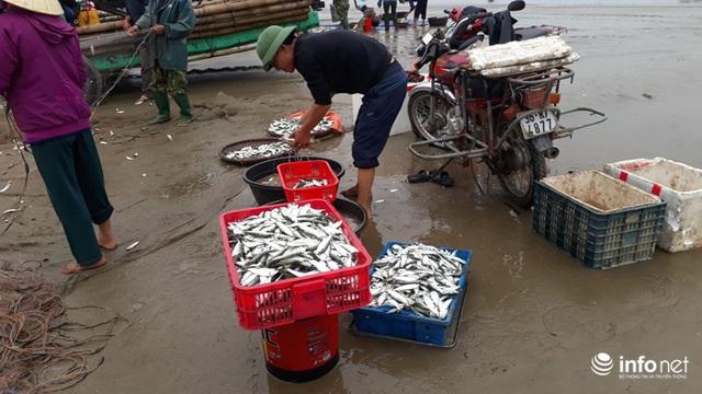 Được mùa cá trích, ngư dân xứ Thanh thu chục triệu mỗi ngày - Ảnh 11.