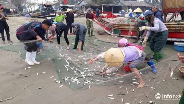 Được mùa cá trích, ngư dân xứ Thanh thu chục triệu mỗi ngày - Ảnh 12.