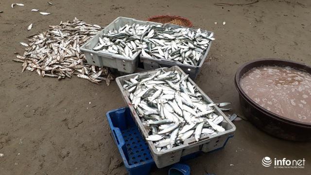 Được mùa cá trích, ngư dân xứ Thanh thu chục triệu mỗi ngày - Ảnh 14.