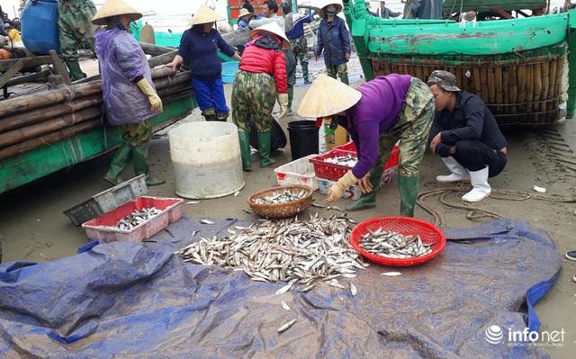 Được mùa cá trích, ngư dân xứ Thanh thu chục triệu mỗi ngày - Ảnh 4.