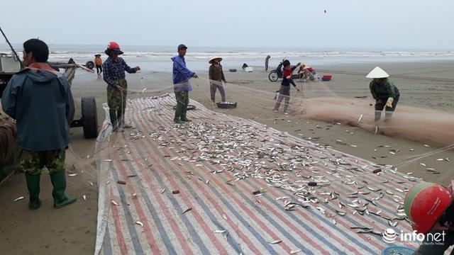 Được mùa cá trích, ngư dân xứ Thanh thu chục triệu mỗi ngày - Ảnh 5.