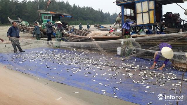 Được mùa cá trích, ngư dân xứ Thanh thu chục triệu mỗi ngày - Ảnh 7.