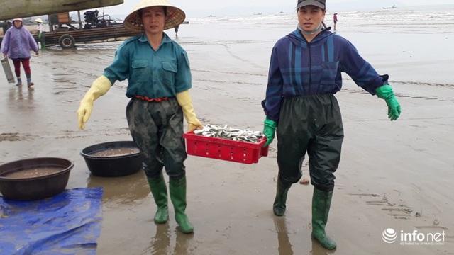 Được mùa cá trích, ngư dân xứ Thanh thu chục triệu mỗi ngày - Ảnh 8.