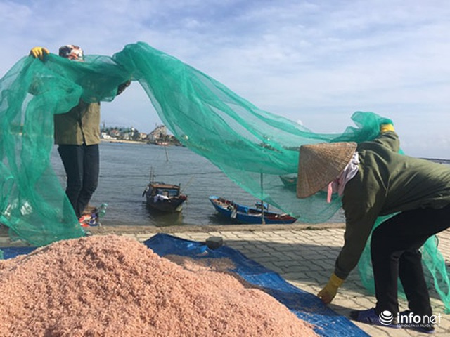 Quảng Bình: Ruốc biển vào gần bờ, ngư dân xúc mệt nghỉ, kiếm 10 triệu đồng/đêm - Ảnh 5.