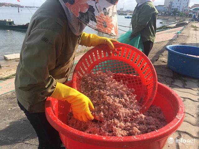 Quảng Bình: Ruốc biển vào gần bờ, ngư dân xúc mệt nghỉ, kiếm 10 triệu đồng/đêm - Ảnh 7.