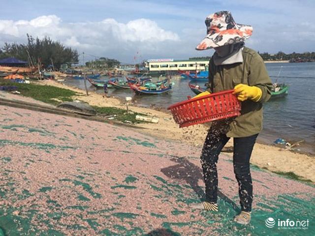 Quảng Bình: Ruốc biển vào gần bờ, ngư dân xúc mệt nghỉ, kiếm 10 triệu đồng/đêm - Ảnh 8.