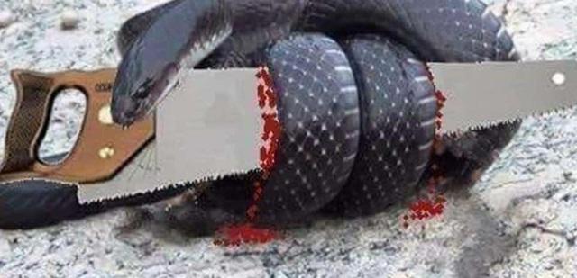 Câu chuyện con rắn và cái cưa và lời giải thích vì sao giai đoạn này doanh nghiệp phải ngủ đông của Shark Hưng: Mất thanh khoản, mất vốn là mất hết - Ảnh 1.