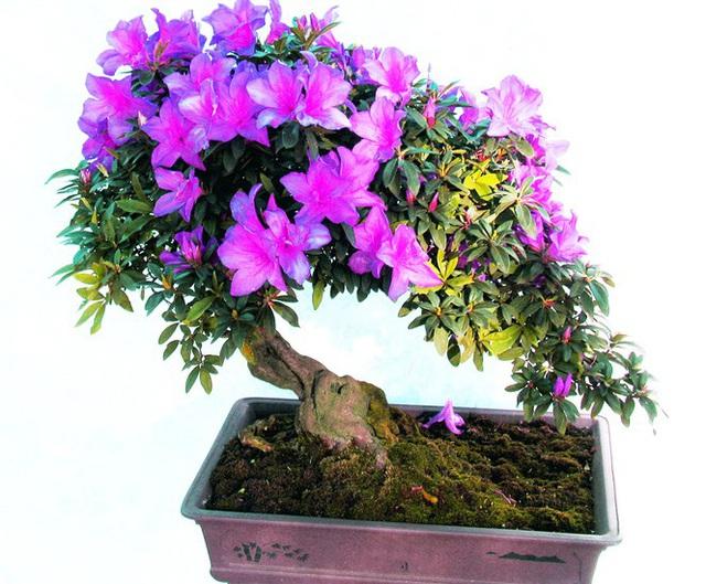 Nhiều loài hoa dại thành bon sai trăm triệu ở Đà Lạt - Ảnh 2.